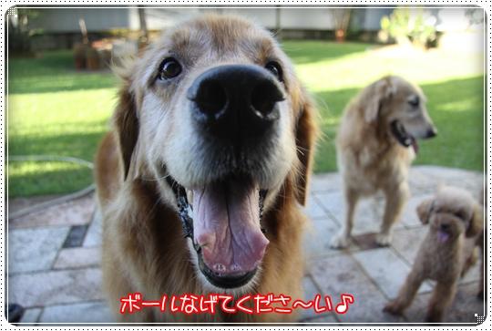 2010,8,11お庭遊び9