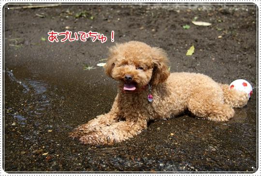 2010,8,20箱根6