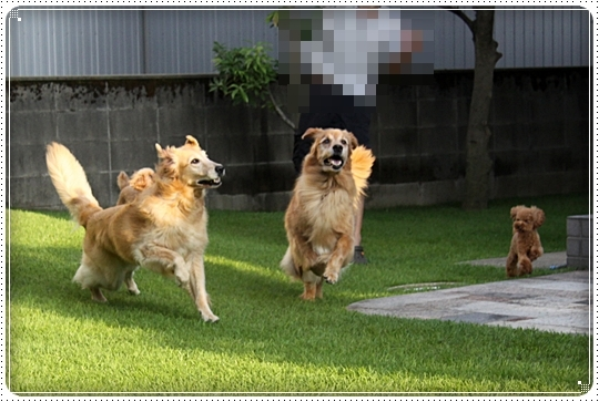 2010,8,22お庭遊び3