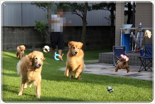 2010,8,22お庭遊び1