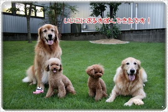 2010,8,22お庭遊び9