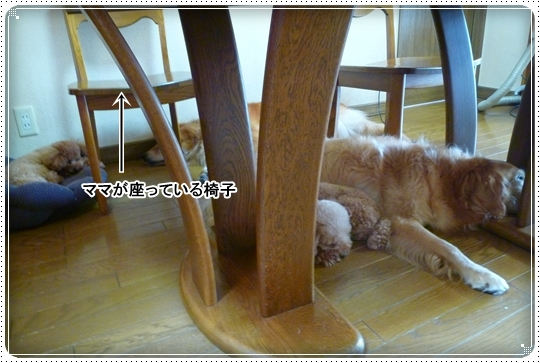 2010,8,23お庭遊び11