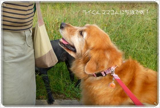 2010,10,12お散歩1