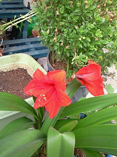 花とシチュー6・11 004