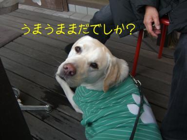 ふたたびyukoさんちで1