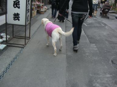 sayakaお姉さんと散歩