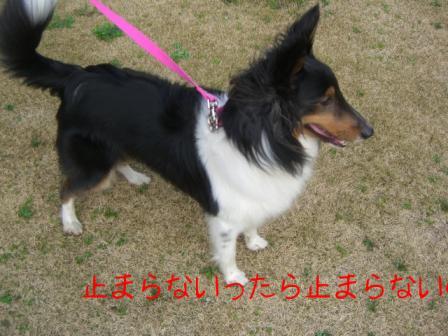 館山にて12