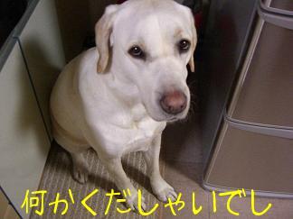 きいちゃん in the kitchen 3