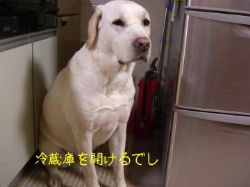きいちゃん in the kitchen 2