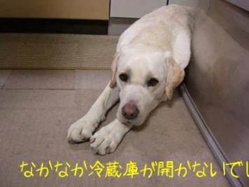きいちゃん in the kitchen 4