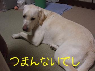 きいちゃん in the kitchen 5