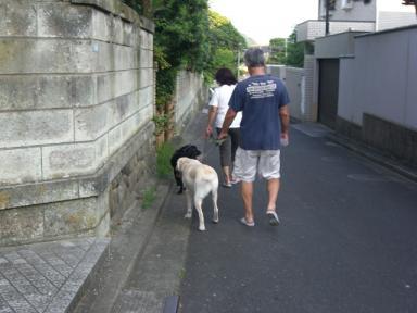 おとうちゃんとお散歩