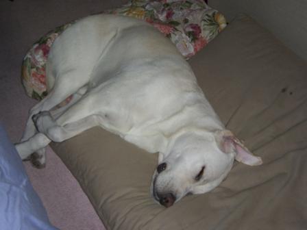 可愛い寝姿1