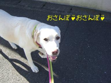 お散歩きいちゃん・その他 009.jpg
