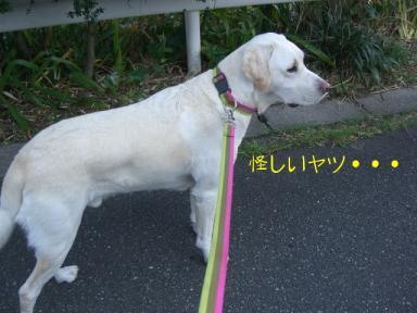 お散歩きいちゃん1