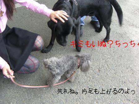 ニコちゃんとRoccaちゃん2