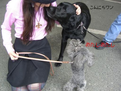 ニコちゃんとRoccaちゃん