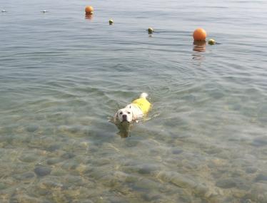 泳ぐきいちゃん