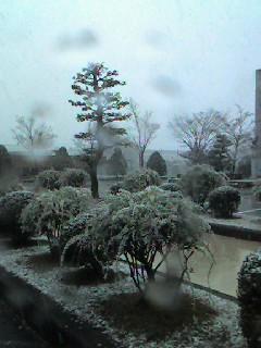 ユキヤナギに降る雪