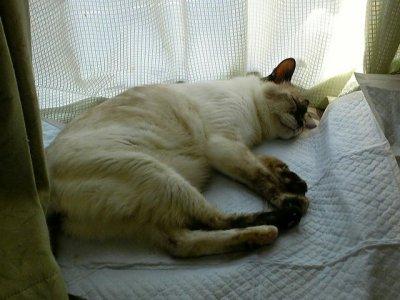通院後のタヌさん(爆睡中~)