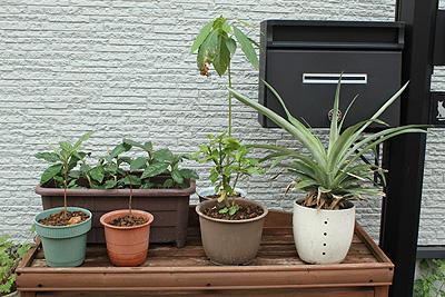 エコ植物1