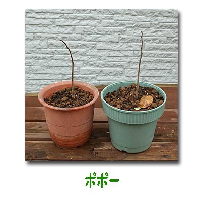 エコ植物3