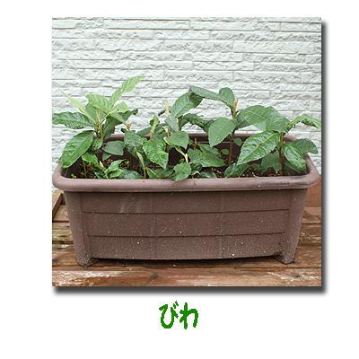 エコ植物2