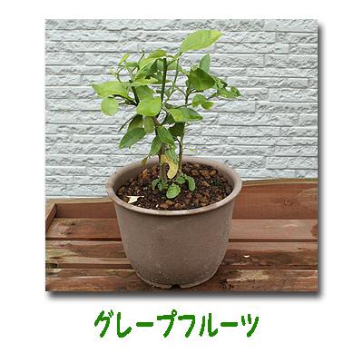 エコ植物5