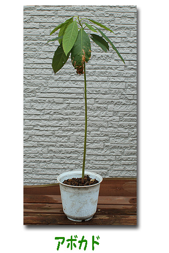 エコ植物6