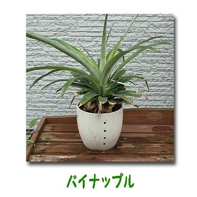 エコ植物4