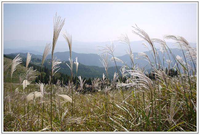 2014年9月30日 鷲ヶ峰コスモスパーク (11)