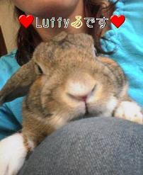 ルフィ(2005)