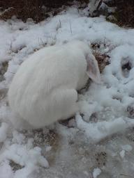 雪ほりほりすみれくん