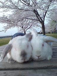 お花見で麗華&みさき2ショット!