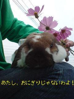 コスモスと心夏ちゃん