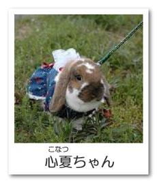 うさぎ色のページ☆心夏