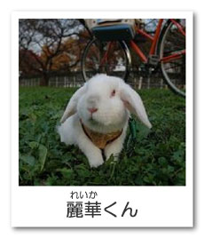 うさぎ色のページ☆麗華