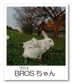 うさぎ色のページ☆BROS