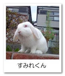 うさぎ色のページ☆すみれ