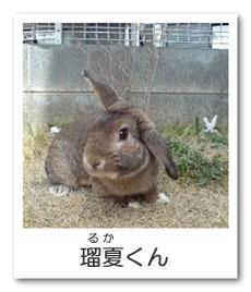 うさぎ色のページ☆瑠夏