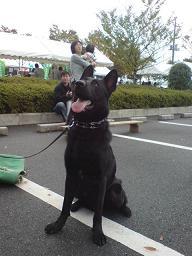 警察犬ガッツくん