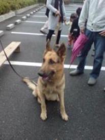 警察犬モーガンくん