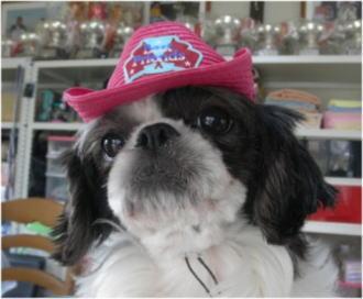 この帽子はビリーヴが一番似合うね!
