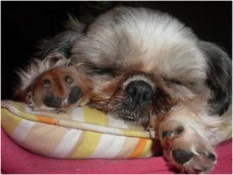 熟睡中のお嬢。