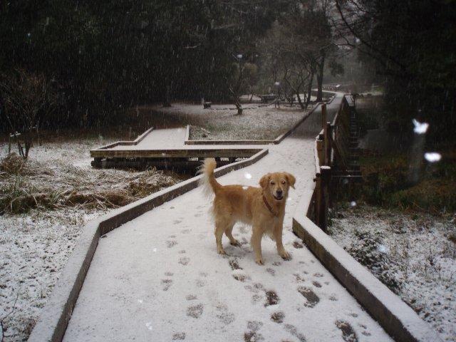 リオ雪が来た 006