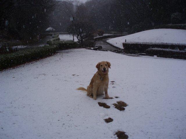 リオ雪が来た 014