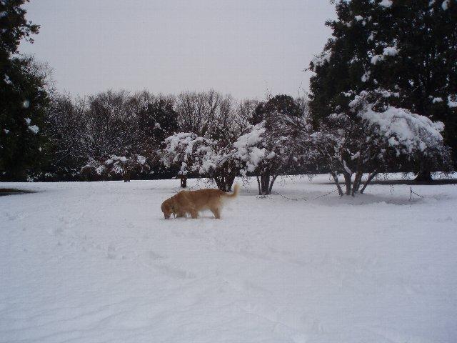 リオ雪が来た 026