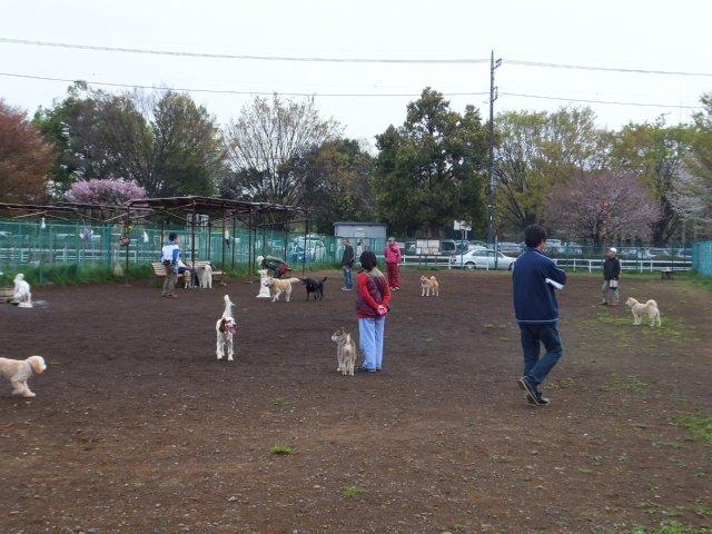 神代植物公園ドッグラン