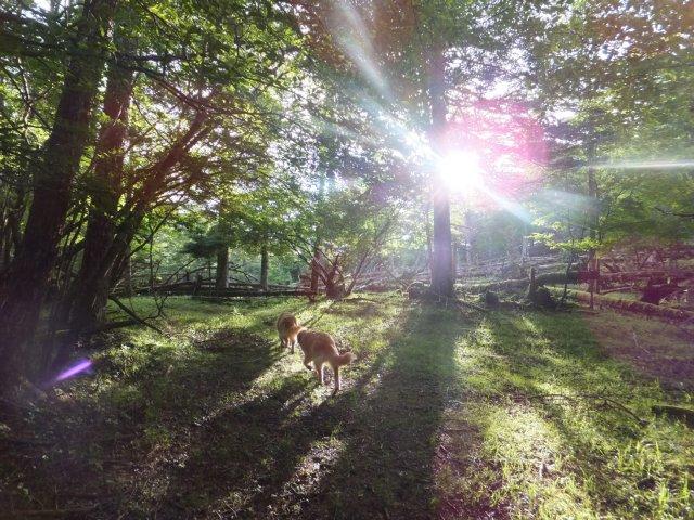 須山口登山歩道2012.7.26