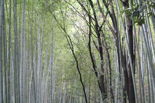 kyoto11z.jpg